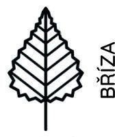 bříza02